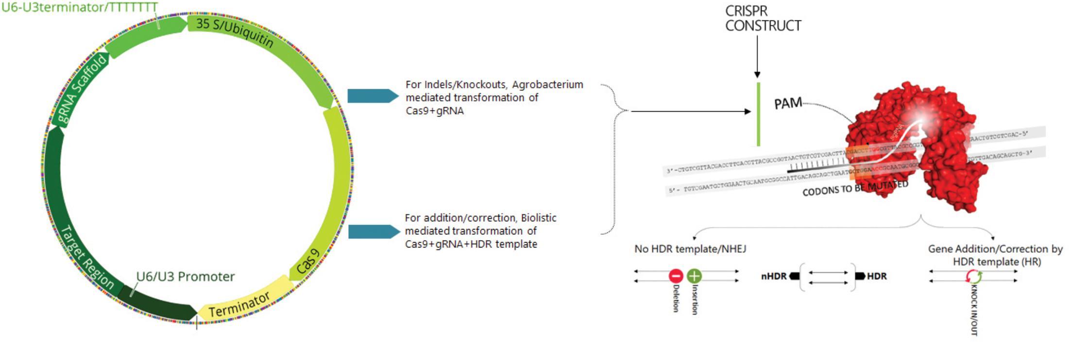 Frontiers | Data Mining by Pluralistic Approach on CRISPR Gene
