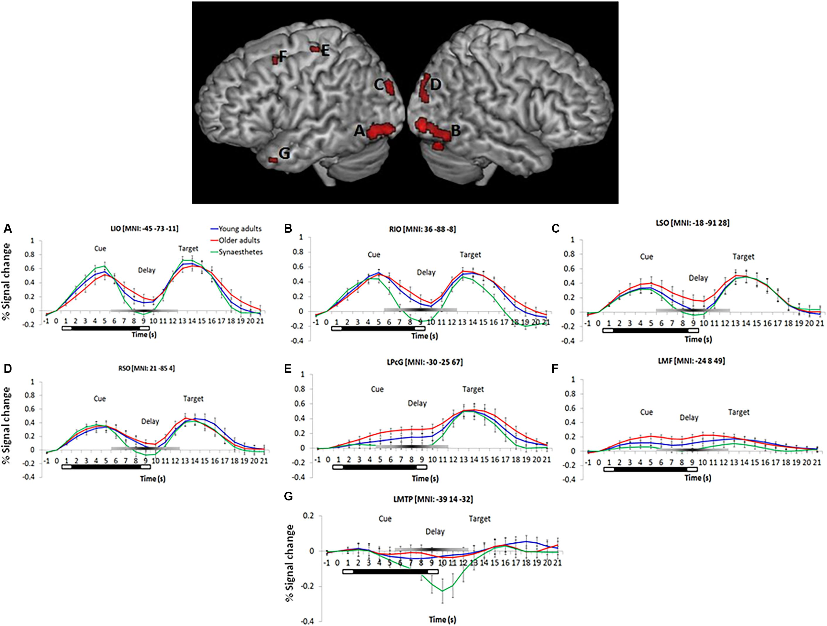 Frontiers | Reduced Visual and Frontal Cortex Activation During