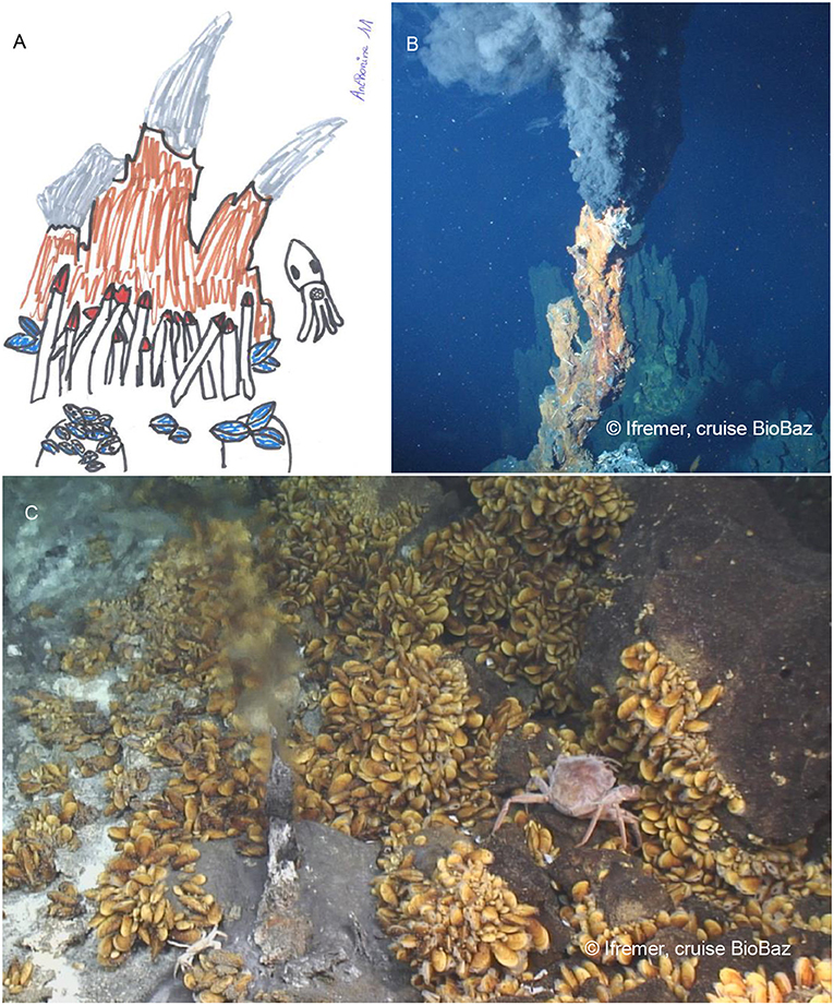 Figure 1 - (A) Drawing of a hydrothermal vent site by a school girl.