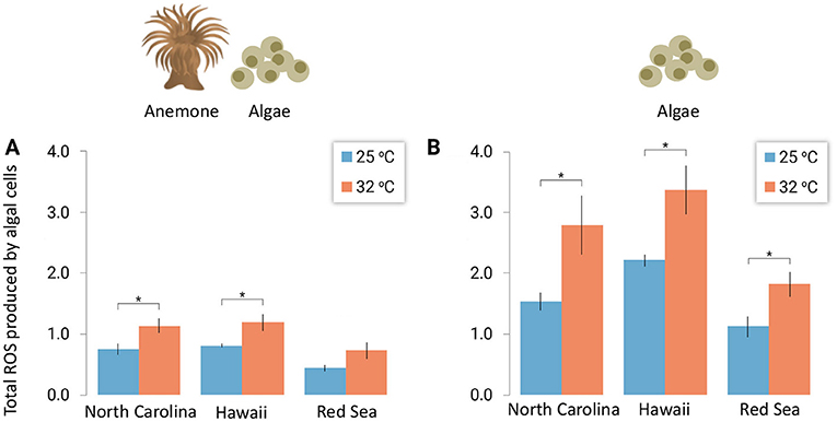 Figure 3 - ROS produced by Symbiodiniaceae, the algae that live together with coral and anemones.