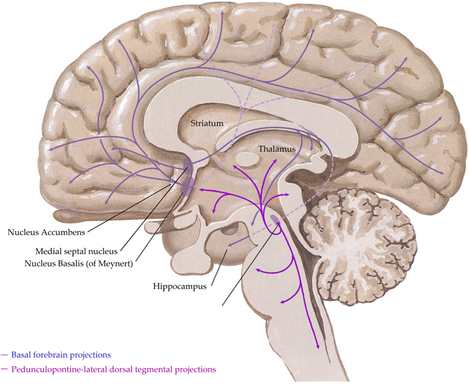 Arcus Palatopharyngeus further Thyrocervical Trunk further Organs besides Polyvagal Theory Fight Freeze Or Engage moreover Iliotibial Tract. on dorsal and ventral systems