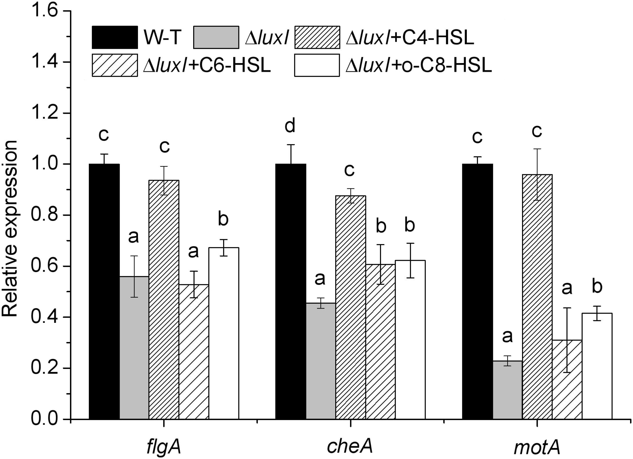 Frontiers | AHLs Regulate Biofilm Formation and Swimming Motility of