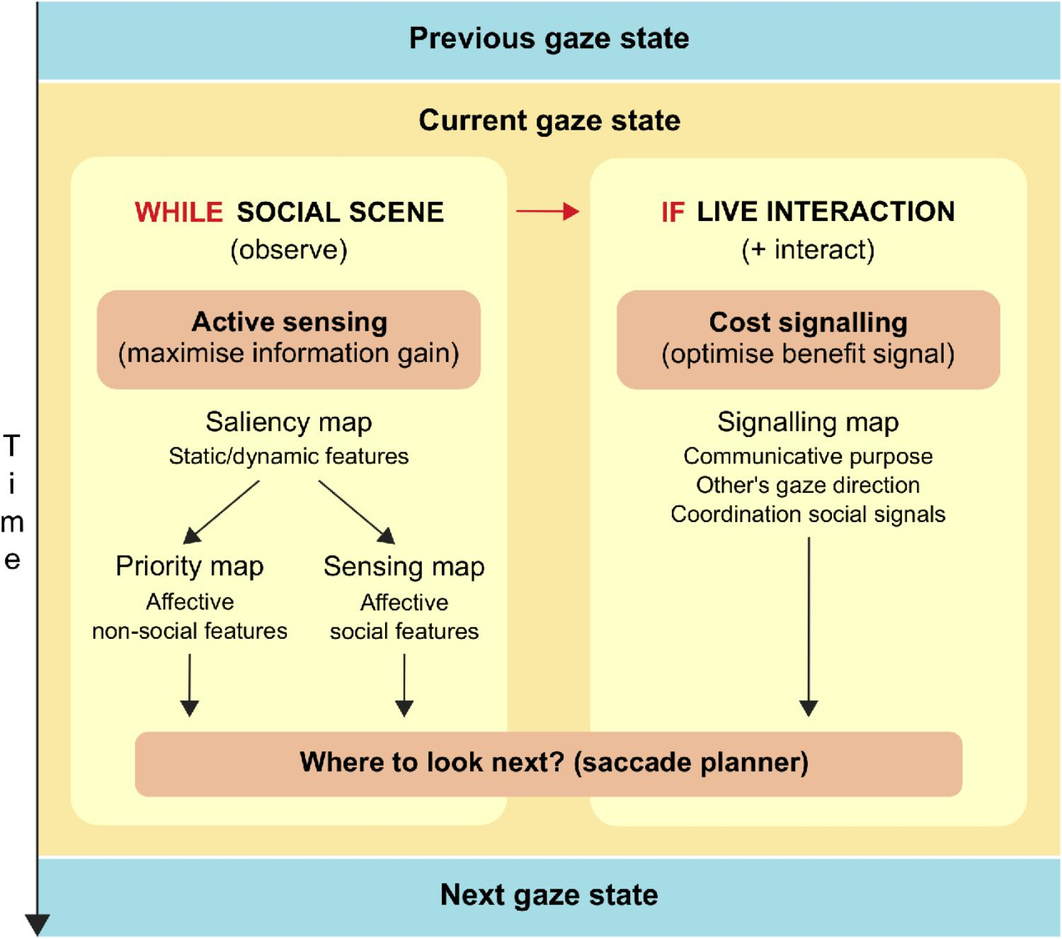 Frontiers | The Role of Eye Gaze During Natural Social