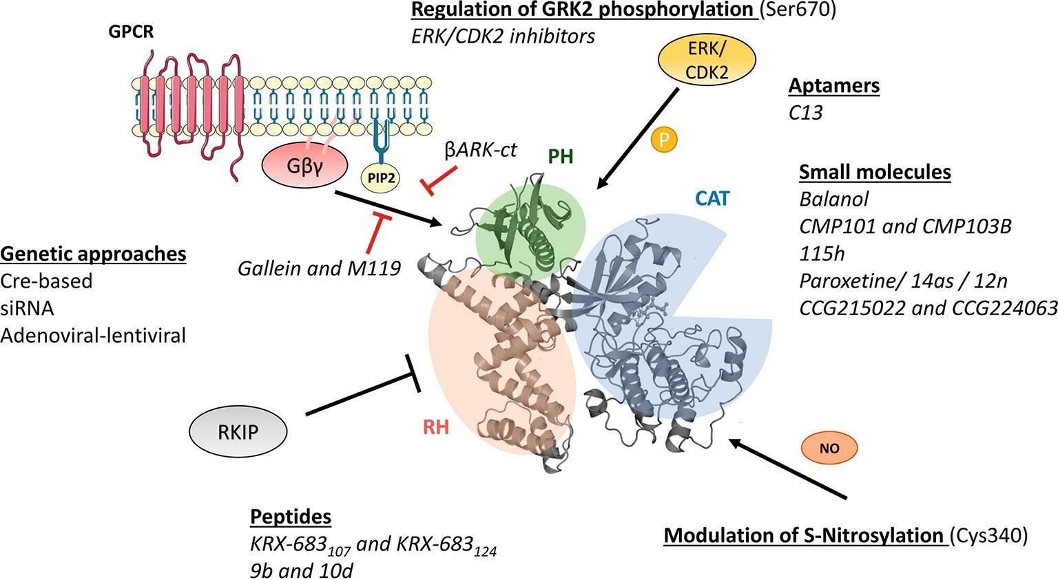 gq proteína quinasa c y diabetes
