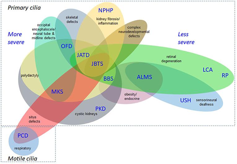 Frontiers   Opportunities and Challenges for Molecular Understanding
