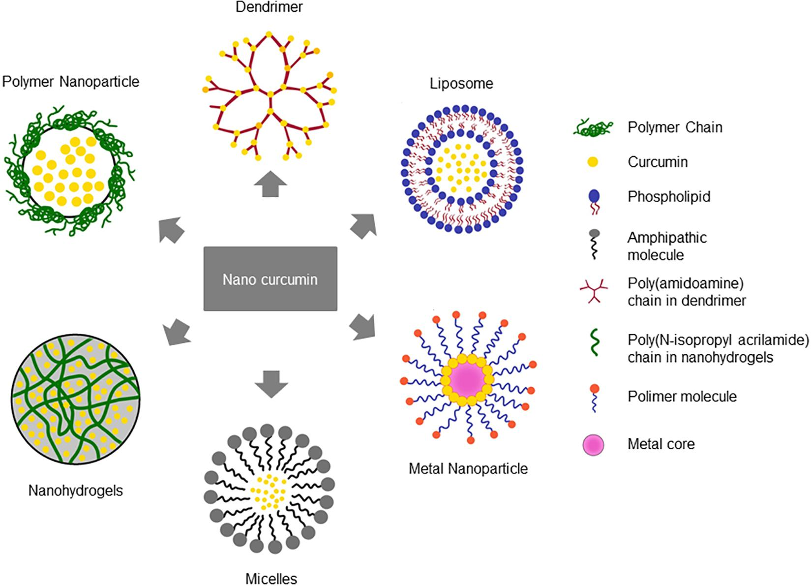 Frontiers | Anti-infective Properties of the Golden Spice