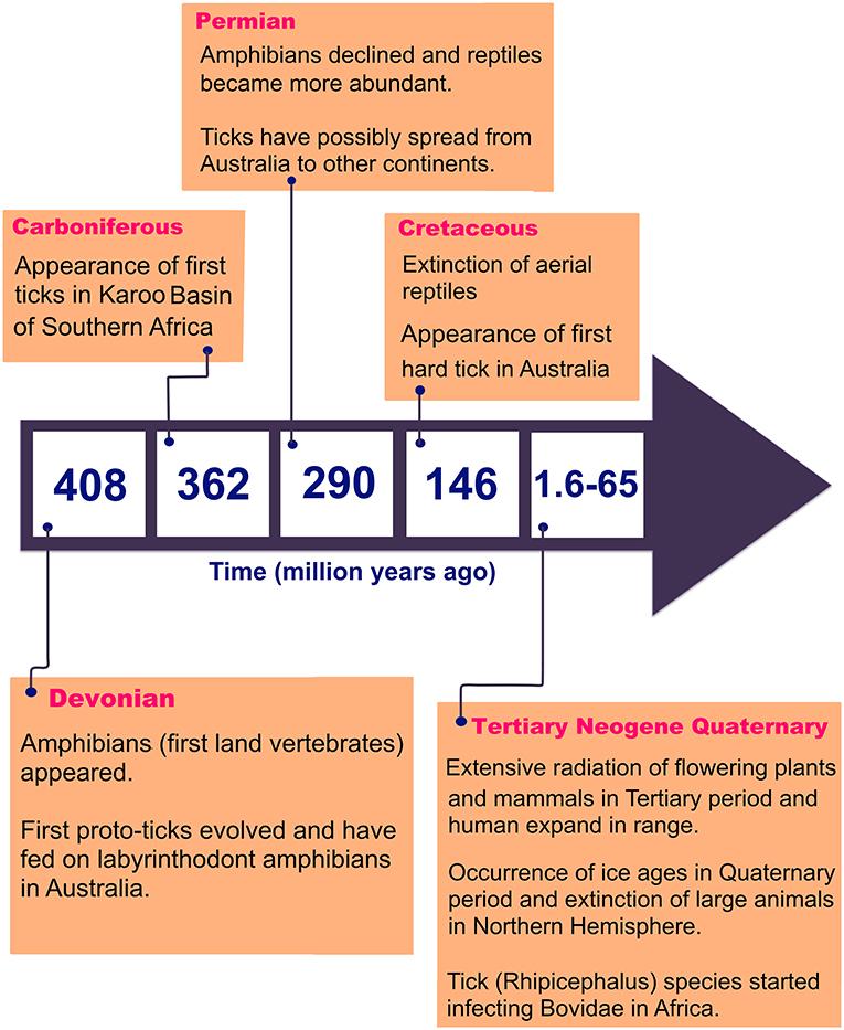 Frontiers | Human Tick-Borne Diseases in Australia