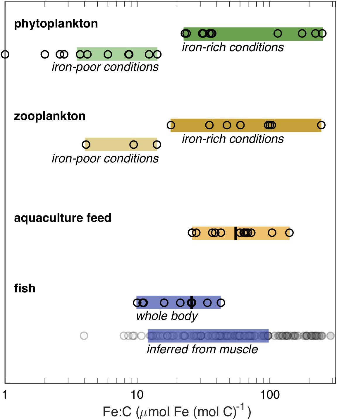 Frontiers | Growth Limitation of Marine Fish by Low Iron