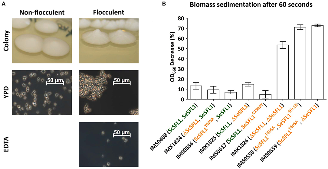 Frontiers | Laboratory Evolution of a Saccharomyces ...