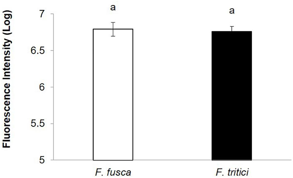 Frontiers | Vector Competence of Thrips Species to Transmit