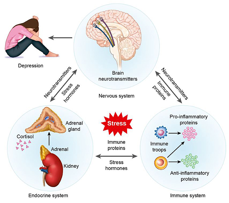 Figure 1 - Overview of the effects of stress on the brain and body.