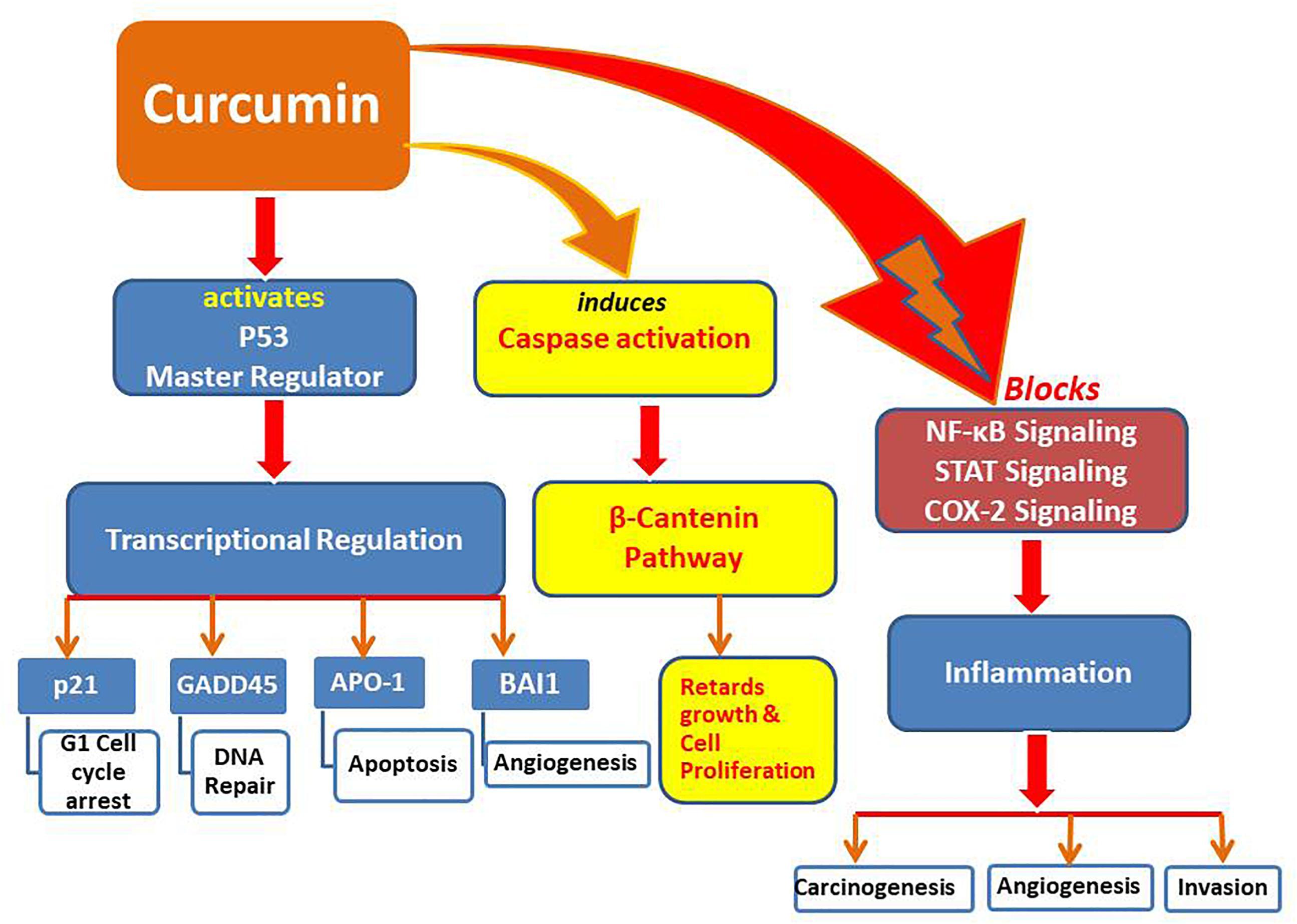 Frontiers   Curcumin as an Alternative Epigenetic Modulator