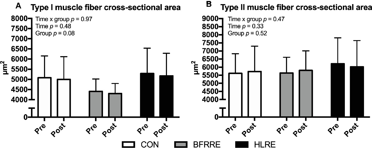 Frontiers | Six Weeks of Low-Load Blood Flow Restricted and High