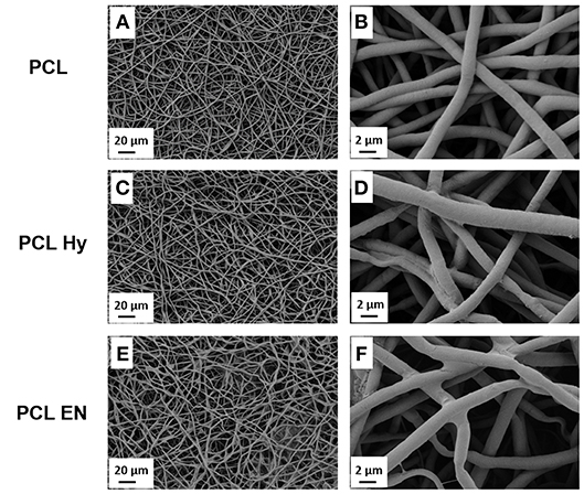 Frontiers | Fibronectin Functionalized Electrospun Fibers by