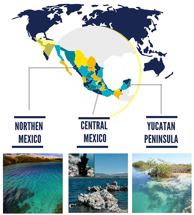 Figure 1 - Microbialite reef locations in Mexico that were examined in our study: Cuatro Ciénegas basin in Northern México, crater-lake Alchichica in Central México, and Bacalar lagoon in the Yucatán Península.