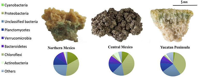 Figure 2 - Several different kinds of bacteria make up the microbialites found in various regions of Mexico.