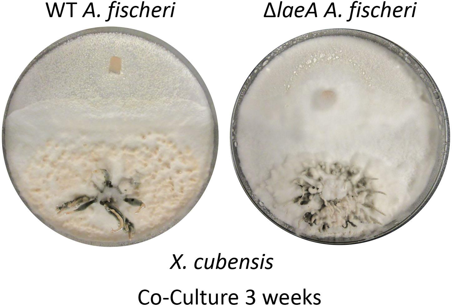 Frontiers | Mapping the Fungal Battlefield: Using in situ Chemistry