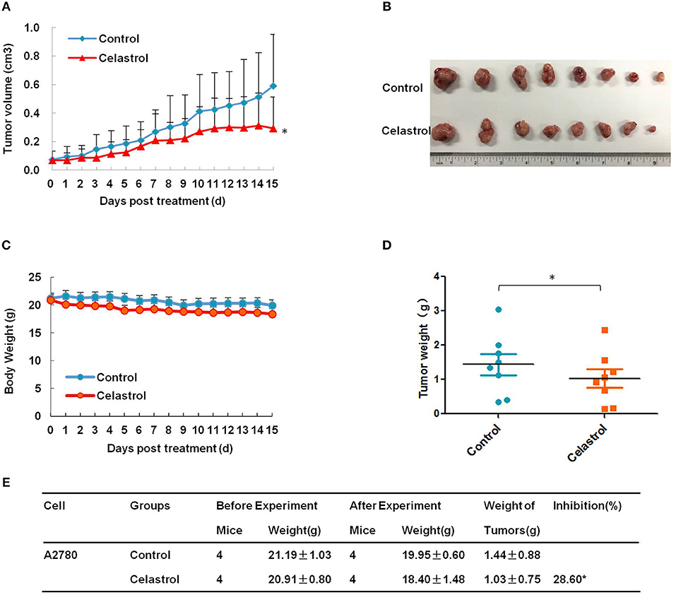 Inhibition of s.c. solid tumor development in nude mice