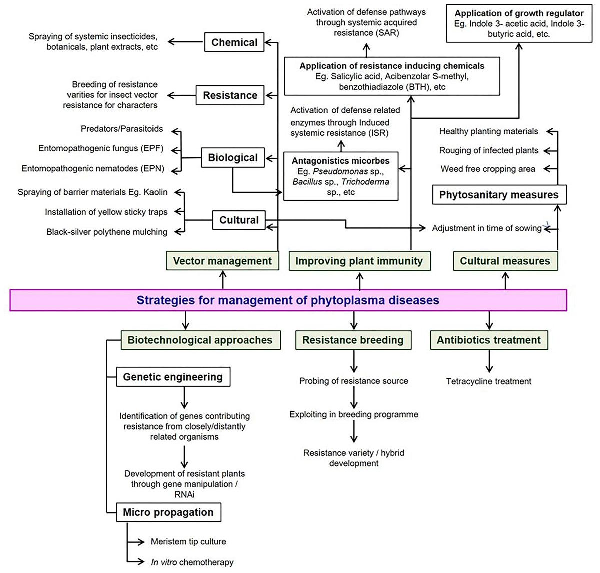 Frontiers | Global Status of Phytoplasma Diseases in
