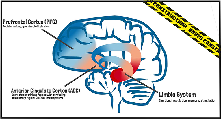 Figure 3 - During adolescence, the prefrontal cortex (PFC) and limbic system are two regions of the brain that are under major construction; they are connected by the anterior cingulate cortex (ACC).