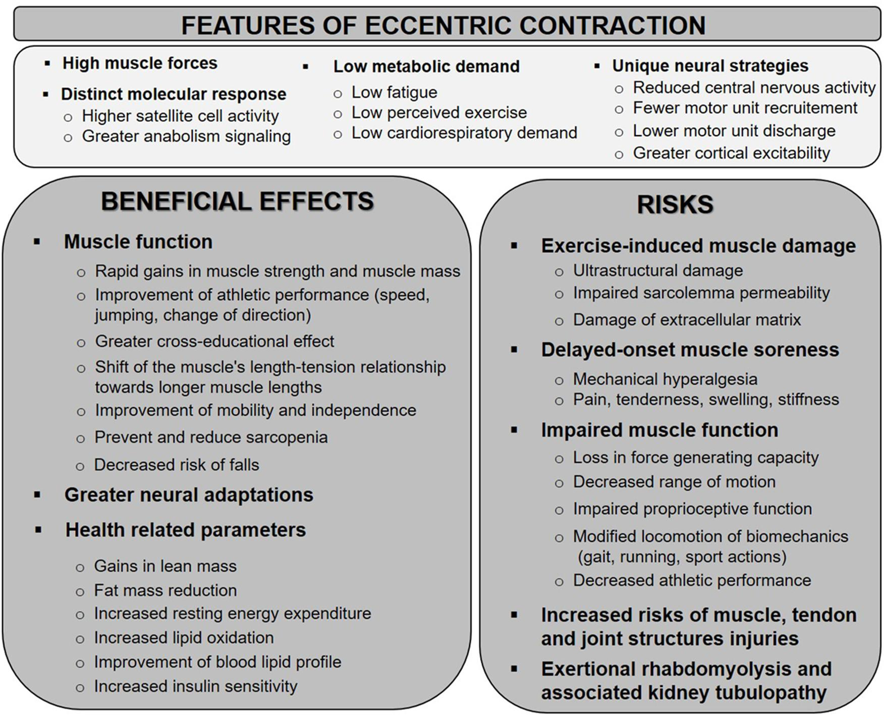 Frontiers | Eccentric Muscle Contractions: Risks and Benefits | Physiology