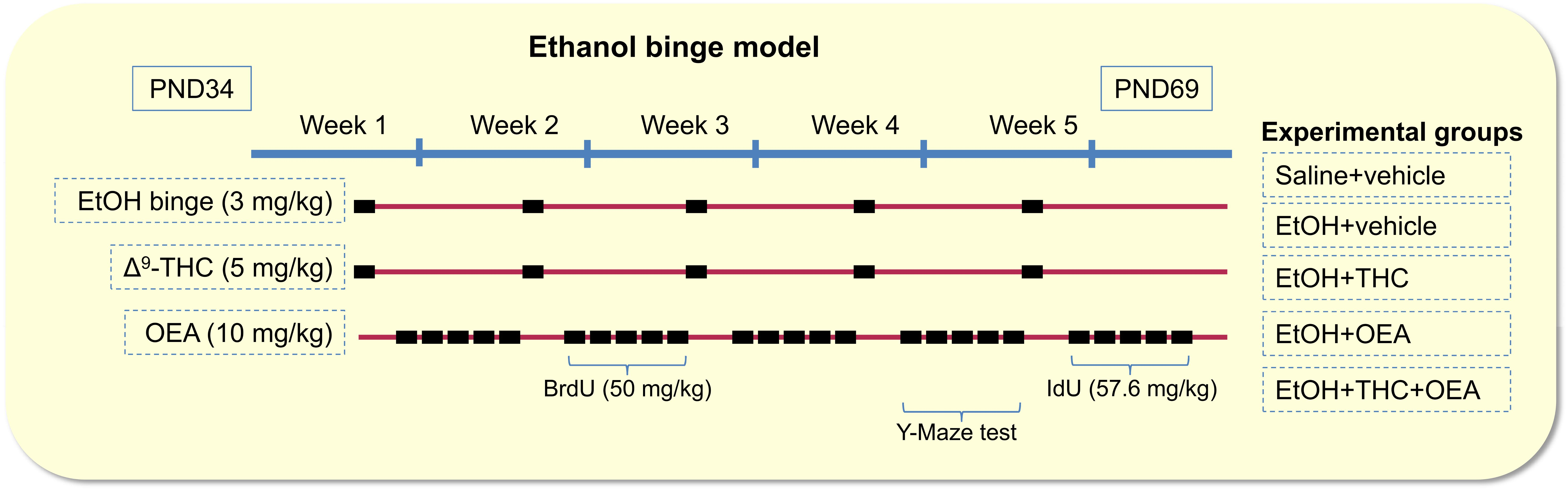 Frontiers | Oleoylethanolamide Modulates BDNF-ERK Signaling
