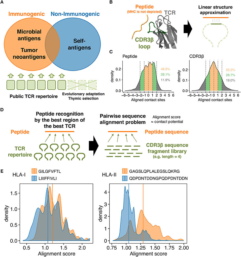 Frontiers | Quanative Prediction of the Landscape of T ... on