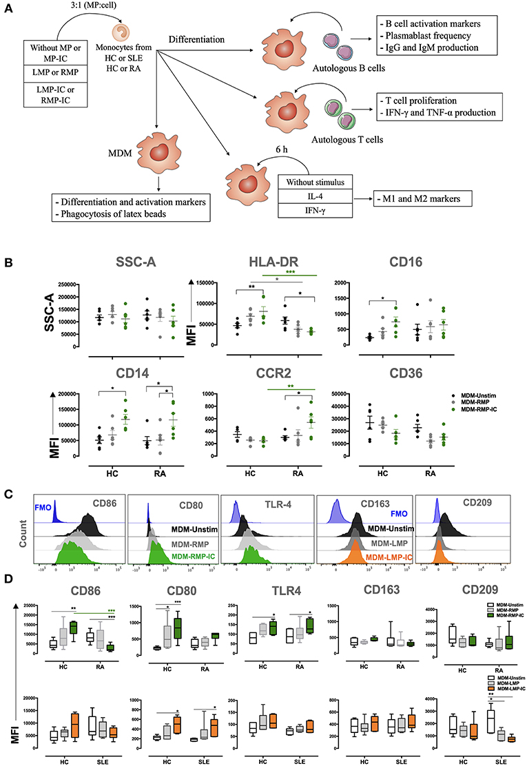 Frontiers | Proinflammatory Differentiation of Macrophages