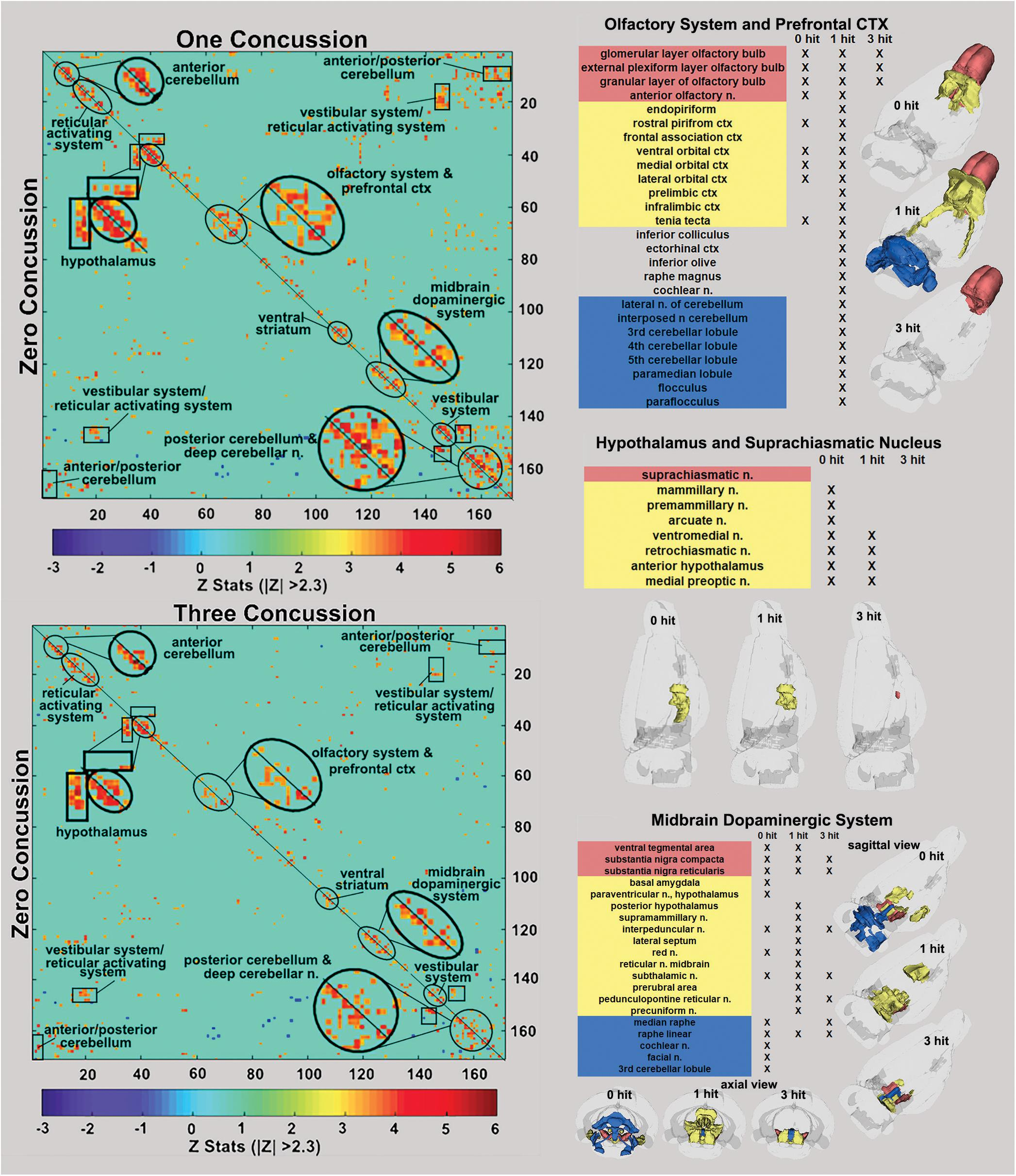 Frontiers | Neuroradiological Changes Following Single or Repetitive