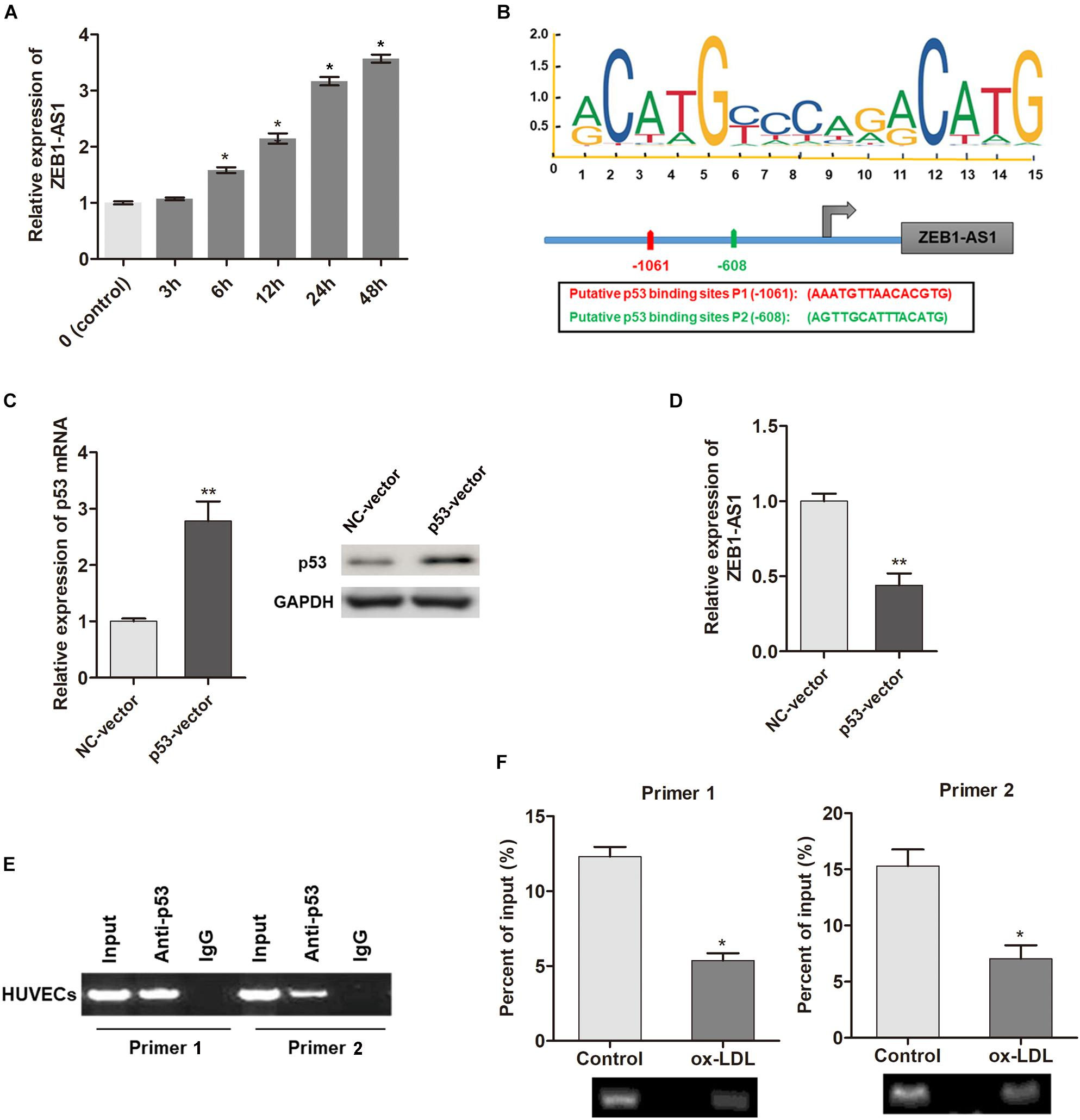 Frontiers | lncRNA ZEB1-AS1 Mediates Oxidative Low-Density