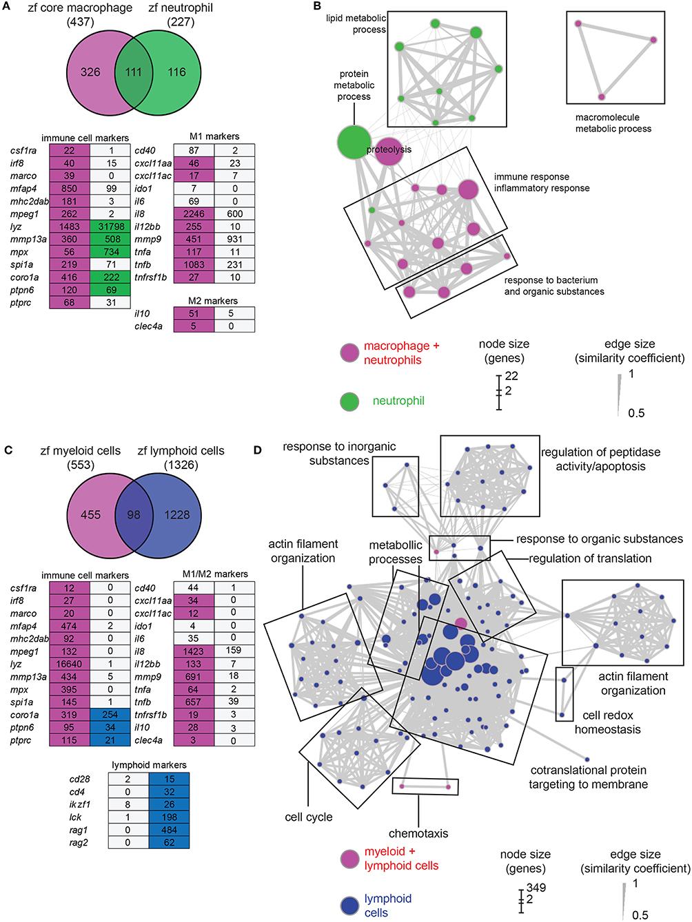 Frontiers   RNAseq Profiling of Leukocyte Populations in Zebrafish