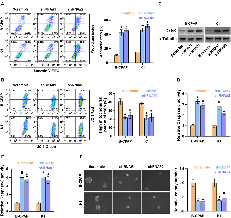 Frontiers   LncRNA FOXD2-AS1 Functions as a Competing