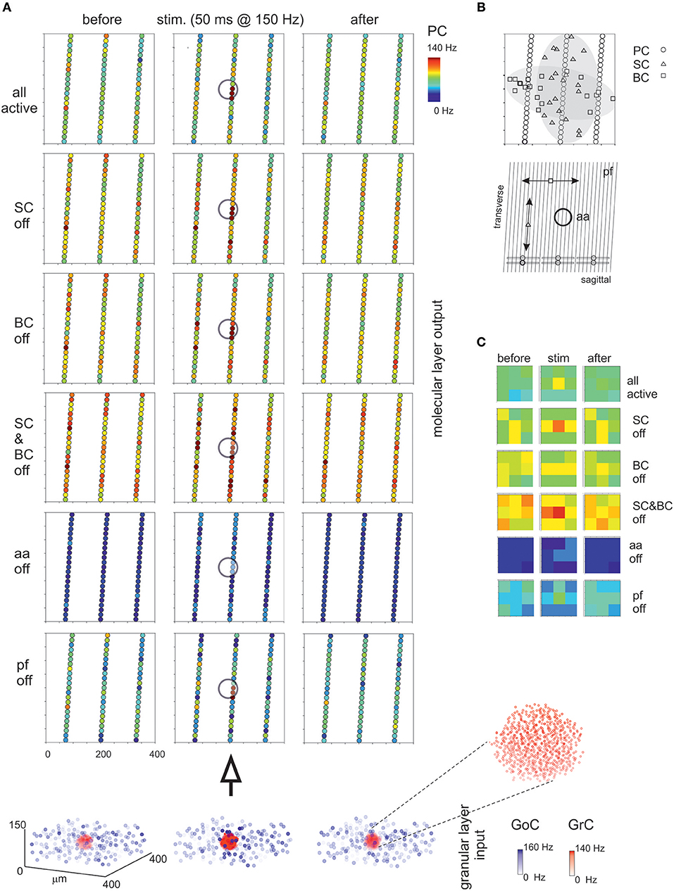 Frontiers | Reconstruction and Simulation of a Scaffold