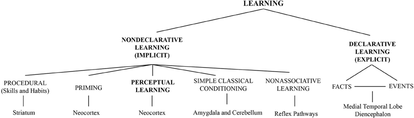 perceptual learning Perceptual learning is self-regulated, in the sense that modification occurs without the necessity of external reinforcement it is stimulus-oriented, with the goal of extracting and reducing.