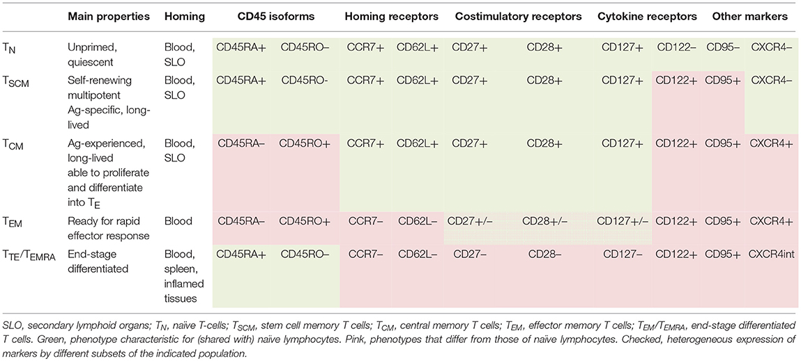 Frontiers | Cell Differentiation Degree as a Factor