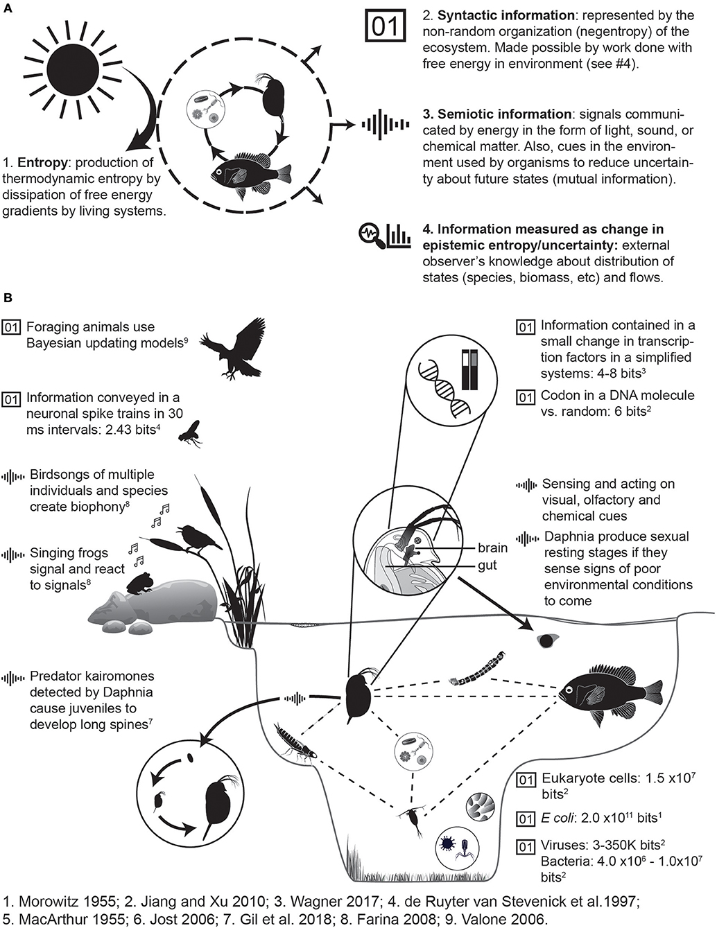 Frontiers | Principles of Ecology Revisited: Integrating