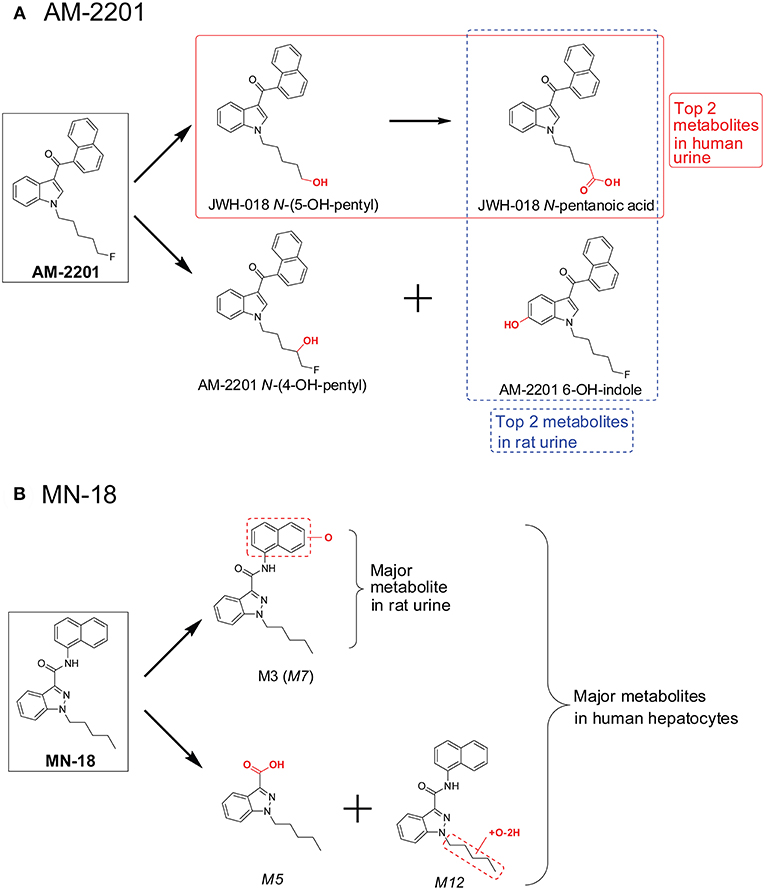 Frontiers | New Synthetic Cannabinoids Metabolism and Strategies to