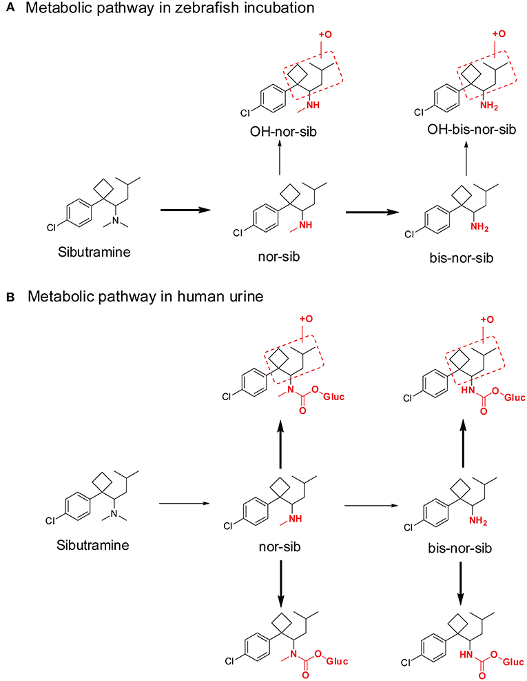 Frontiers | New Synthetic Cannabinoids Metabolism and
