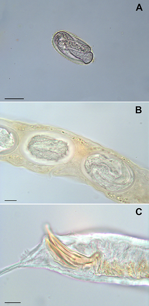 Frontiers | Occurrence of Rhabditid Nematodes in the Pet