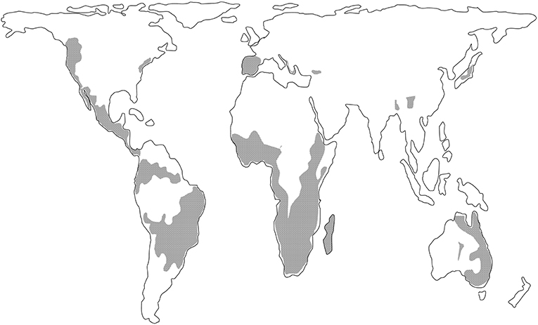 Figure 1 - World map showing the main areas (shaded) where resurrection plants grow.