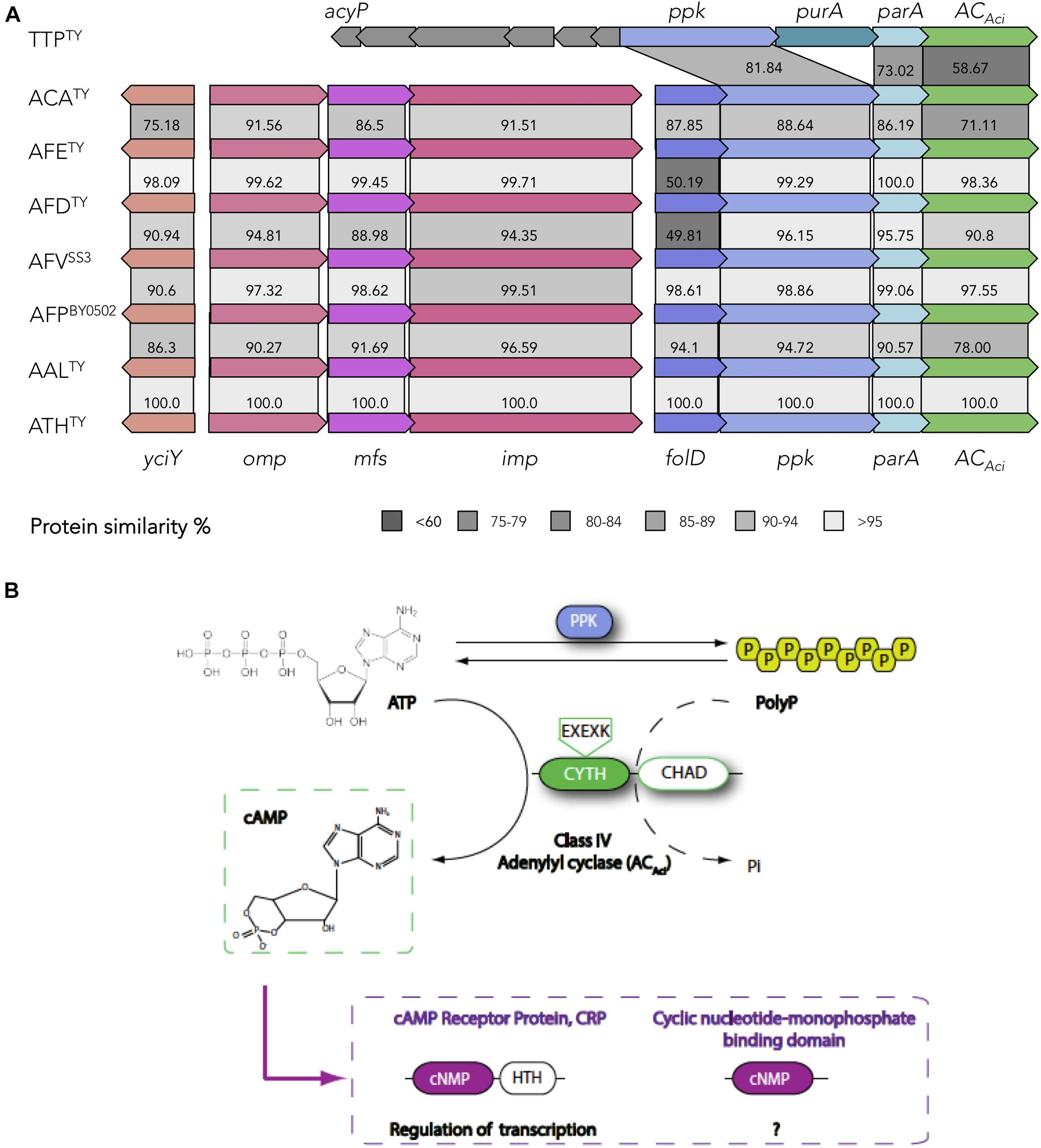 Frontiers | Nucleotide Second Messenger-Based Signaling in