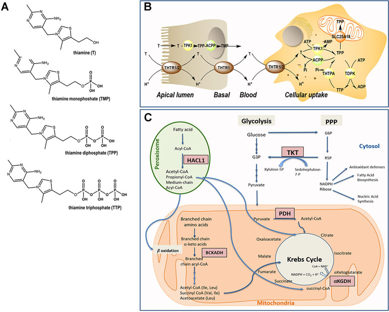 Frontiers | Neurological, Psychiatric, and Biochemical