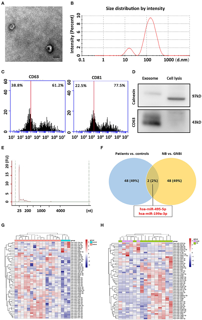Frontiers | Exosomal hsa-miR199a-3p Promotes Proliferation