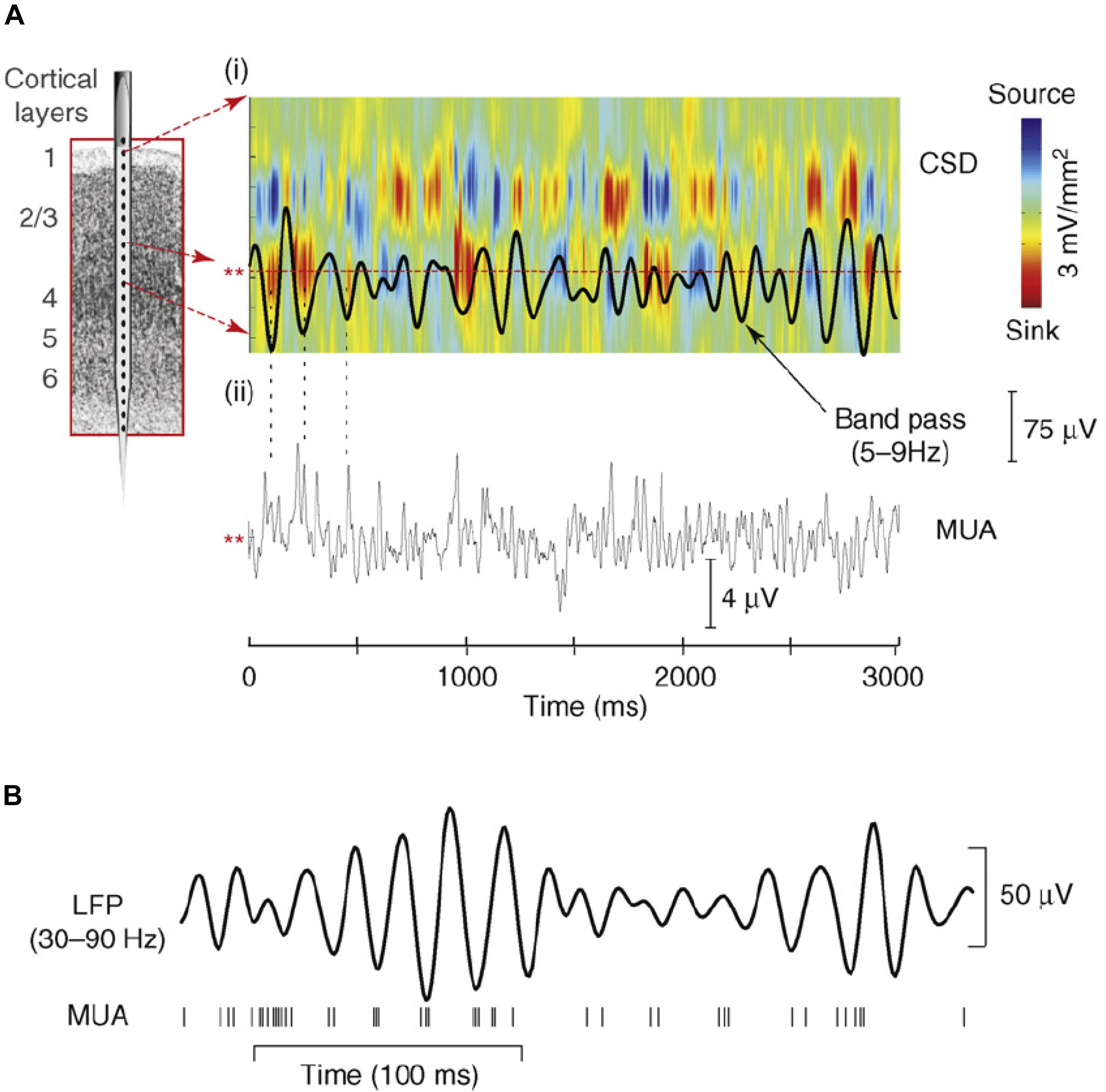 Frontiers | The Role of Neuronal Oscillations in Visual