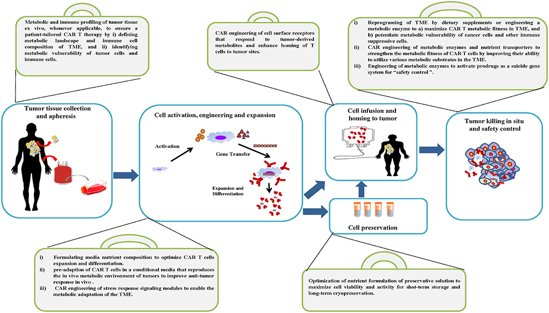 Frontiers   A Metabolism Toolbox for CAR T Therapy   Oncology