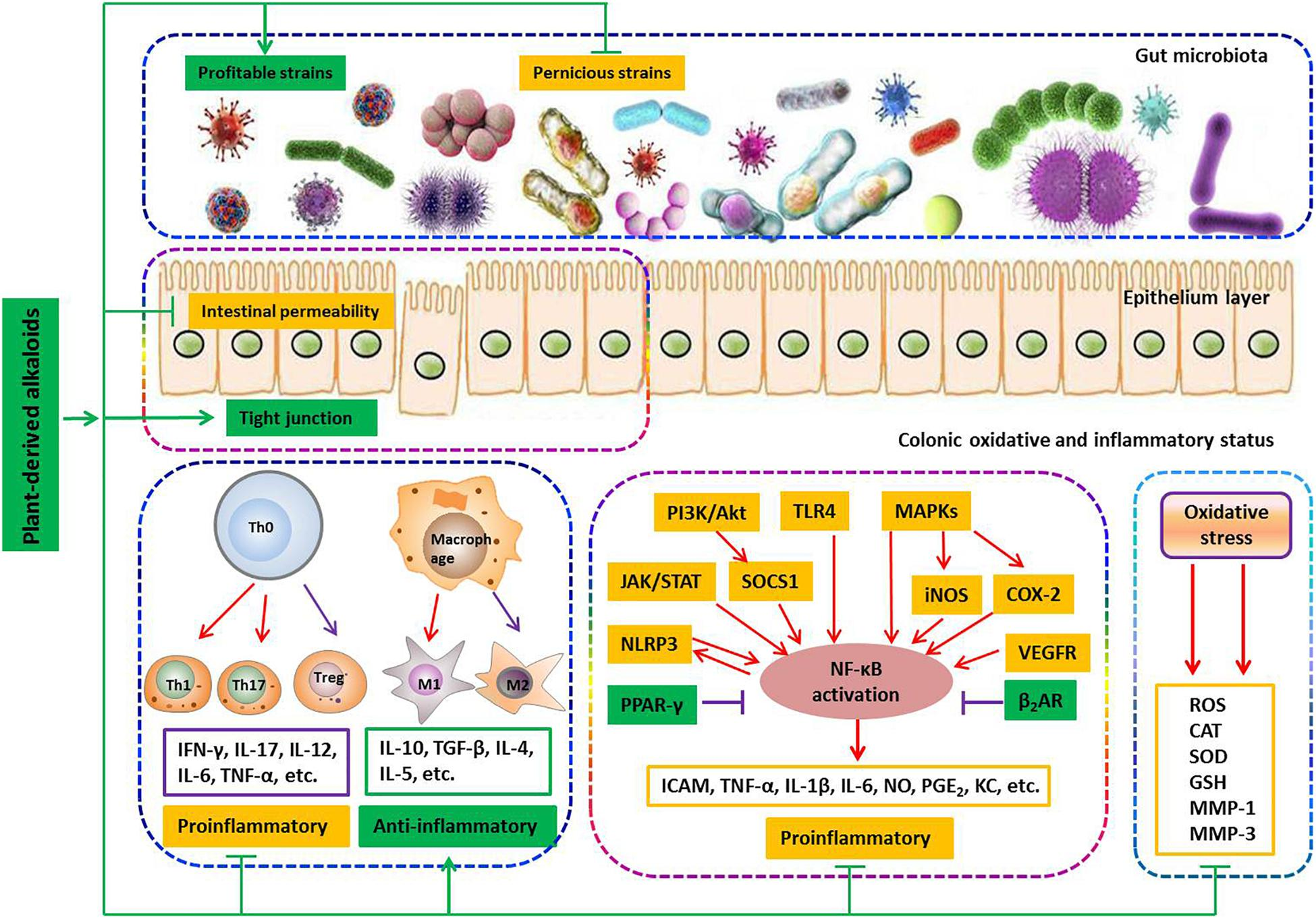 Frontiers | Plant-Derived Alkaloids: The Promising Disease