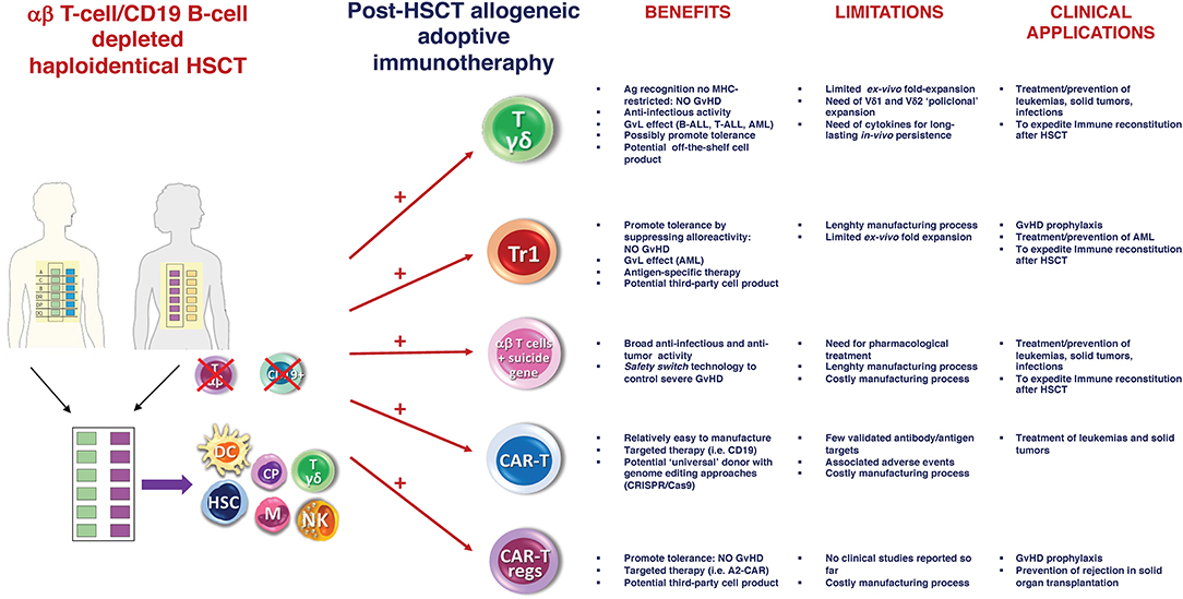 Frontiers | Graft Engineering and Adoptive Immunotherapy: New