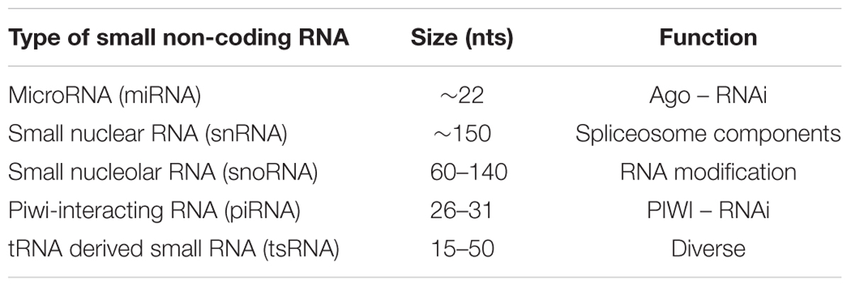 Frontiers | Small Non-coding RNAs: New Class of Biomarkers and
