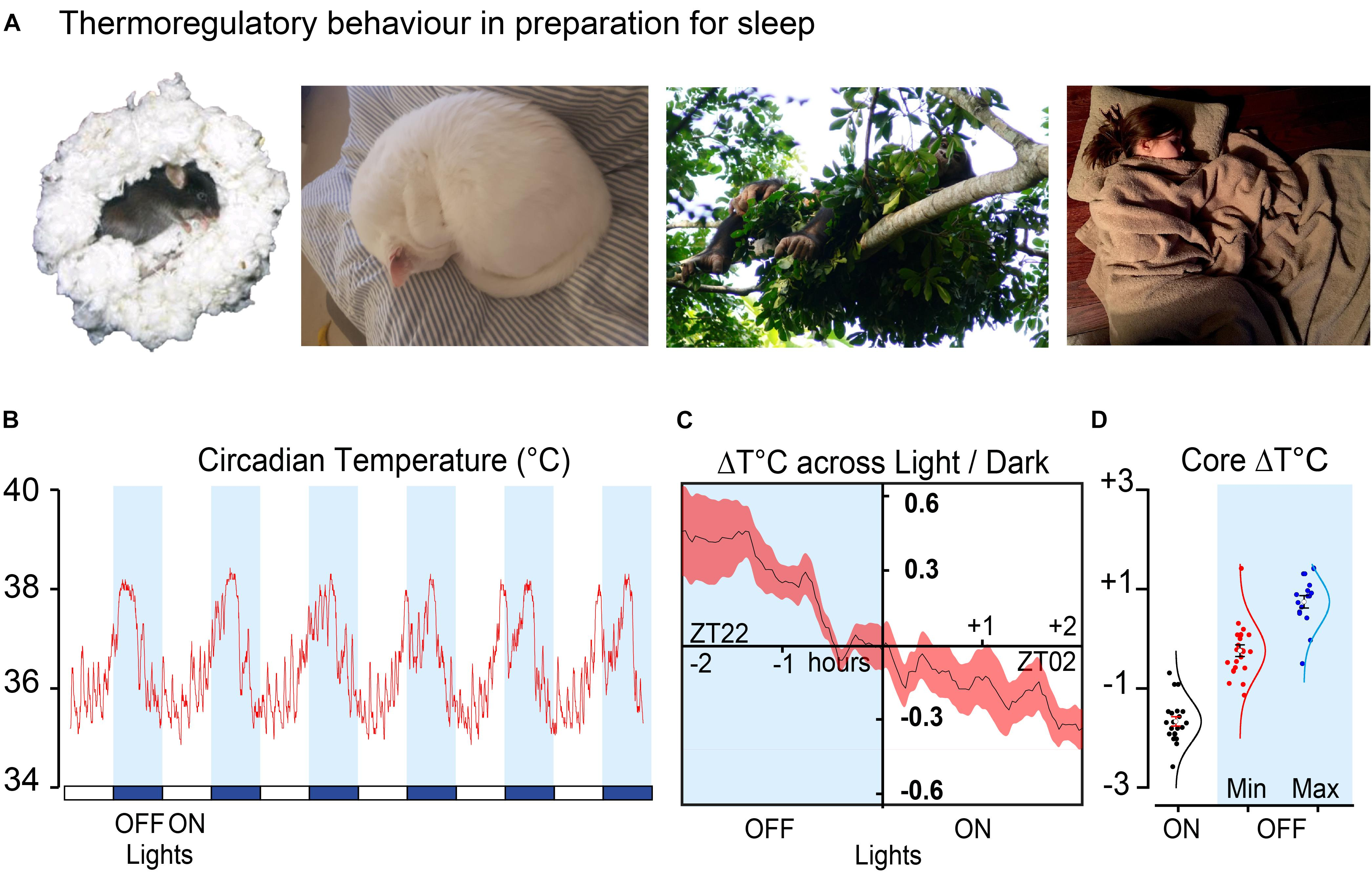 Frontiers | The Temperature Dependence of Sleep | Neuroscience