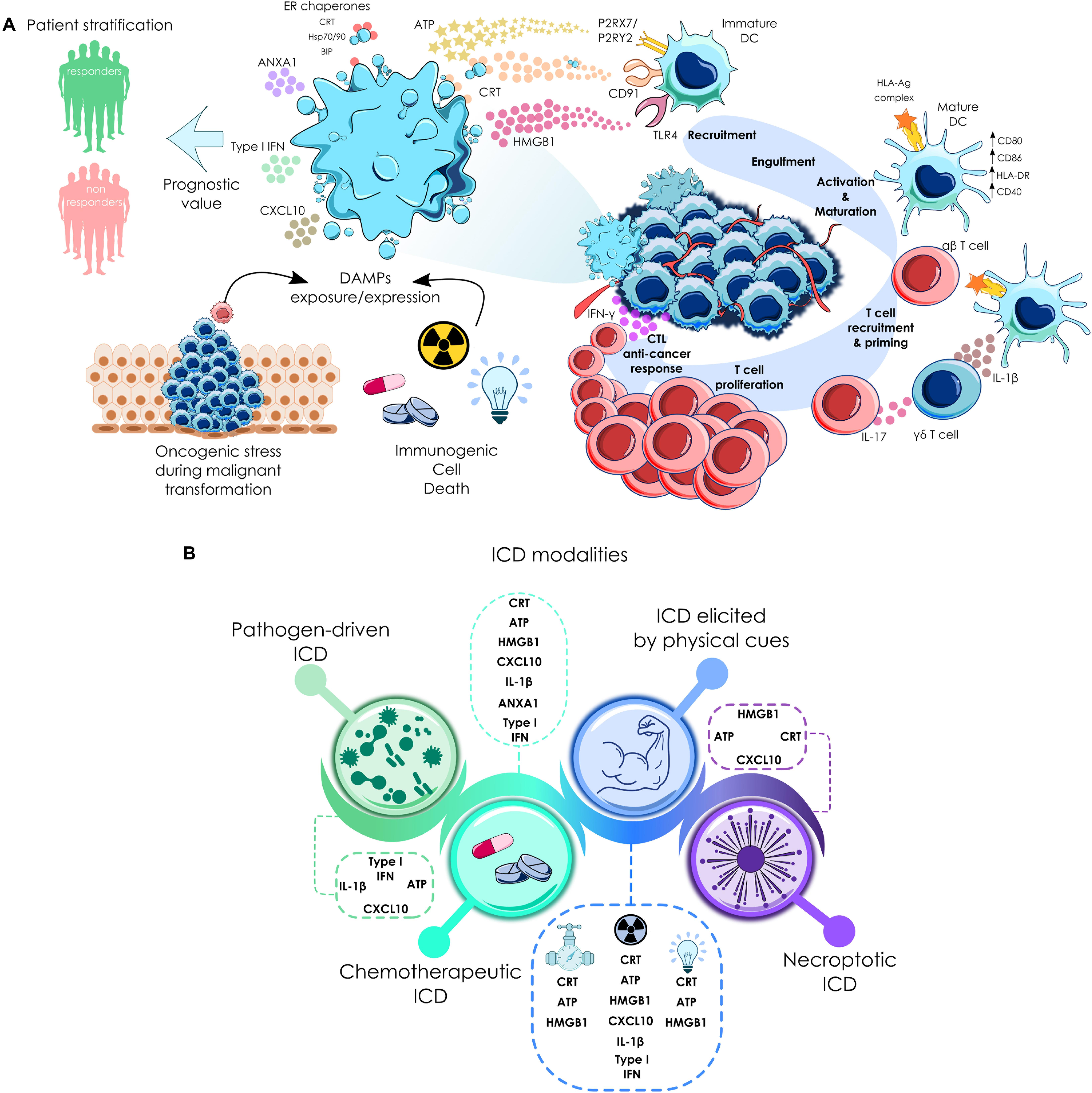 Frontiers | Immunogenic Cell Death and Immunotherapy of ...